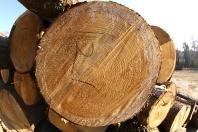 Log Prices – WNC Sawmill